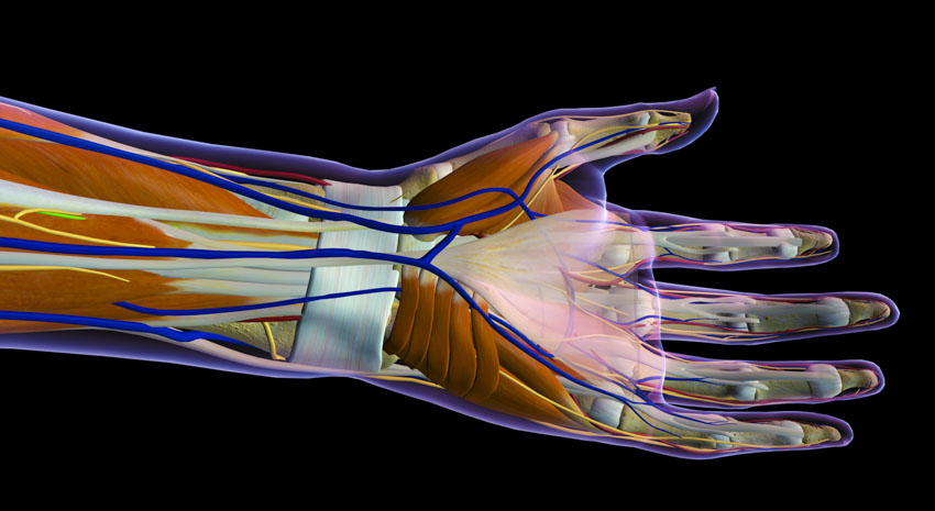 Acupuncture Carpal Tunnel Syndrome Relief Confirmed